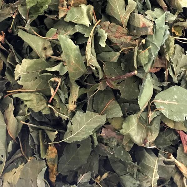 Mirabellenblätter