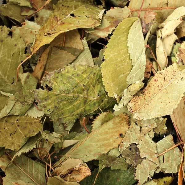 Kirschbaumblätter