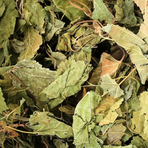 Maulbeerbaumblätter